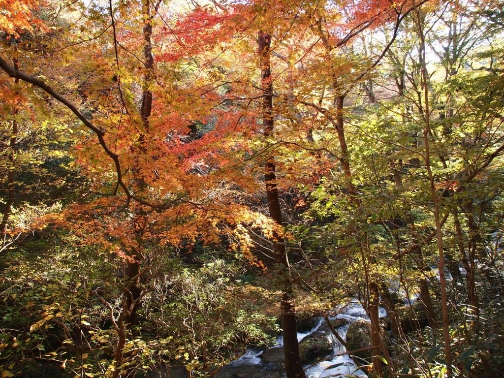 2013年11月13日 茨城県民の日♪おいでよ茨城に♪花貫渓谷、横根山、都室山、土岳、里山歩き♪ヽ(´▽`)/ by robakun