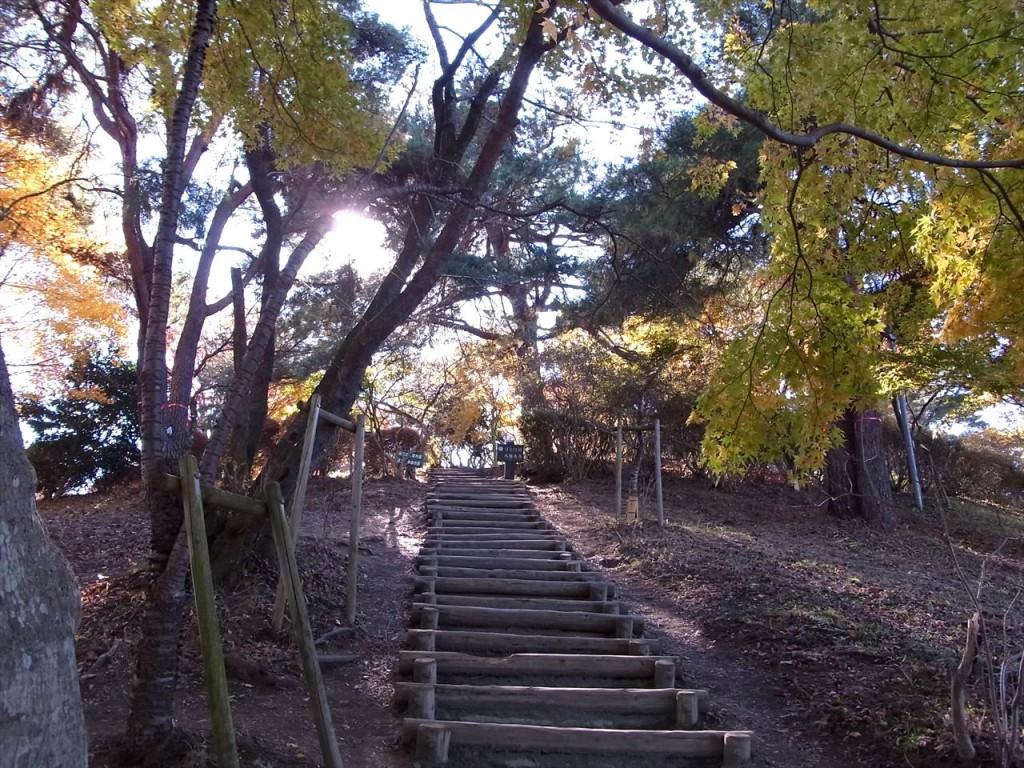 2013年11月20日 桜山(初) 冬桜観賞ハイキング 城峰公園オマケ付き by tatsuca