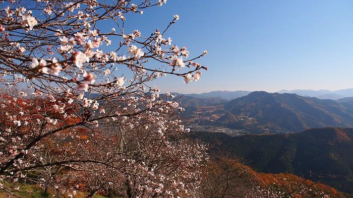 2014年11月22日 (続) 桜山 紅葉と桜 by nan_chan